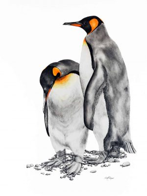 The Kings - King Penguins - Macquarie Island