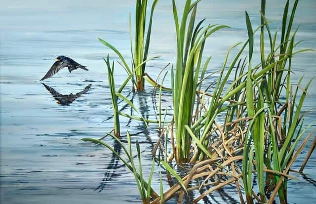 Reflection-River-Reeds-and-Welcome-Swallow